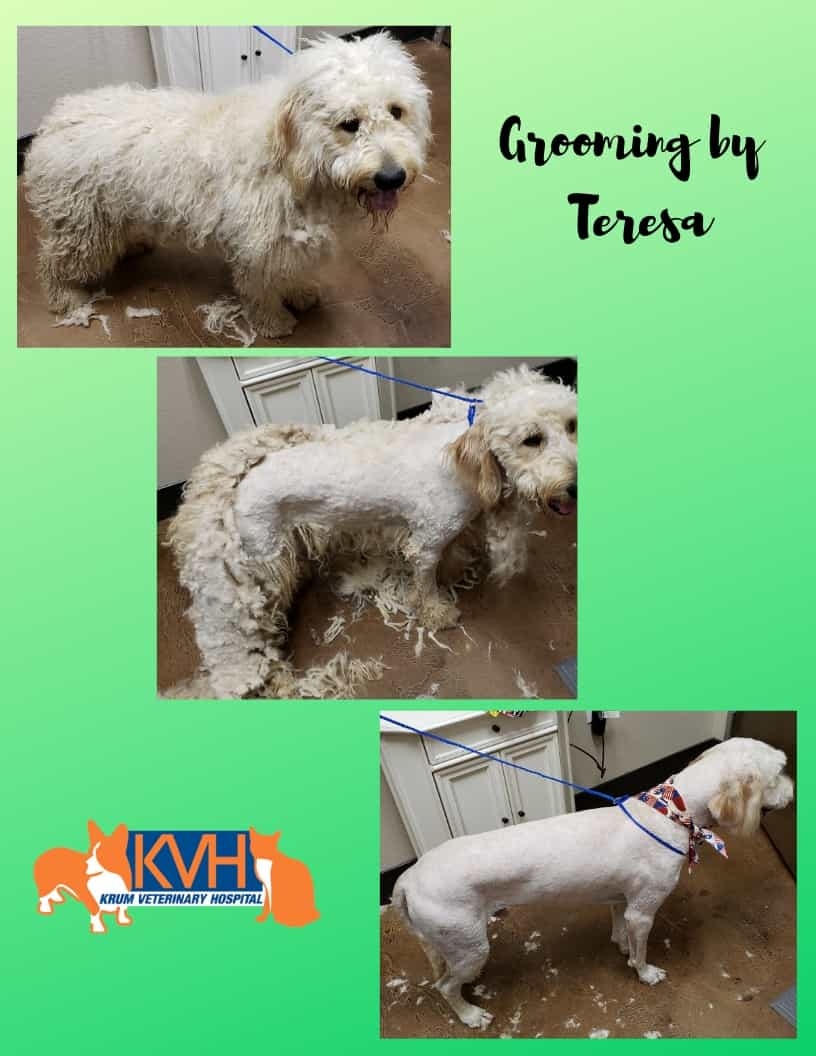 Pet Grooming In Krum Tx Krum Veterinary Hospital